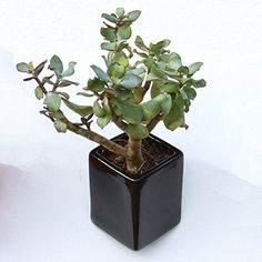 Thelermont Hupton Off The Wall Pot  Small  Black >>> Details can be found by clicking on the image.