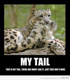 Cheetahs and THEIR tails (: