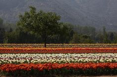 My Kashmir