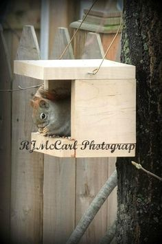 Squirrel in our nesting house @ www.rjmccarlphotography.com