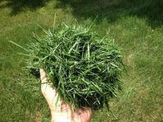Good uses of mowing waste in the garden - My CMS Container Plants, Container Gardening, Amazing Gardens, Beautiful Gardens, Vegetable Garden, Garden Plants, Organic Gardening, Gardening Tips, Permaculture Design