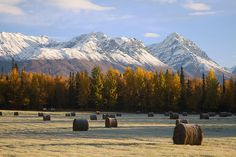Farm Loop Road, Palmer, Alaska