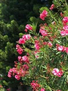 Plant Life Boca Raton Florida