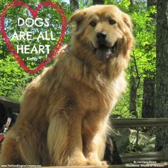 October 4th is World's Pet Day. Dogs love us unconditionally and all they want in return is love. Does your pup make your life better? Share and let everyone know your dog is all heart. Woof!