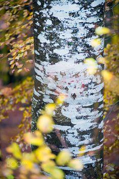 Spots - null Dan, Photography, Photograph, Fotografie, Photo Shoot, Fotografia, Photoshoot