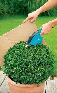Garten & Gemüseanbau mit Kindern Cut boxwood: Step 3 of 4 When remodeling your kitchen, it is also a Boxwood Garden, Topiary Garden, Back Gardens, Outdoor Gardens, Container Gardening, Gardening Tips, Garden Projects, Backyard Landscaping, Garden Inspiration