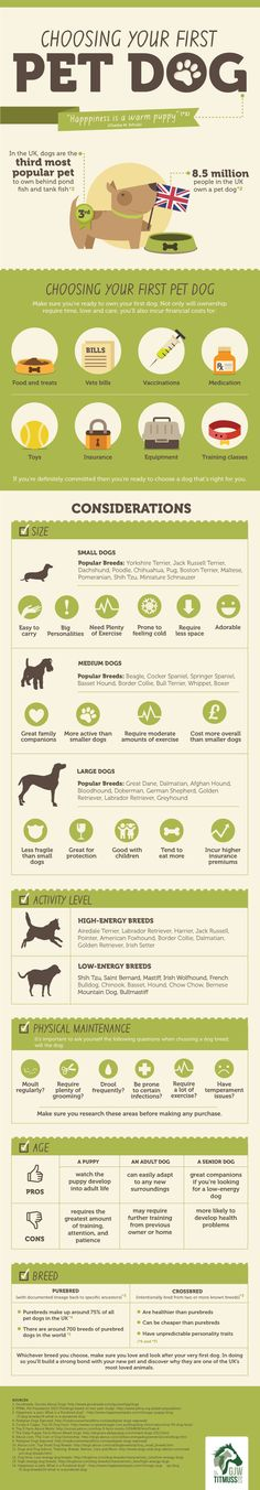 Image result for It Doesn't Matter What Sort Of Dog-related Question, We Have The Answer infographics