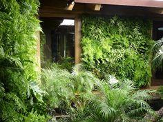 Vertical fern walls