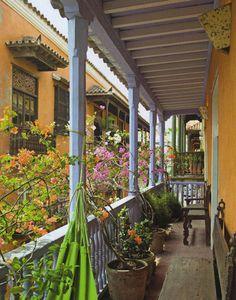 Container plants , balcony