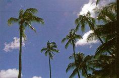 Trees by fffreds taken with: Minolta x-700; fujifilm superia x-tra 400 at Hanauma Bay Hawaii http://flic.kr/p/gp1Yzv
