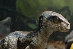 Jurassic World: Fallen Kingdom - Beliebt Bilder Jurassic World Park, Jurassic World Trailer, Jurassic Park Trilogy, Jurassic World Raptors, Jurassic Movies, Jurassic World Fallen Kingdom, Raptor Dinosaur, Dinosaur Art, Fantasy Wesen