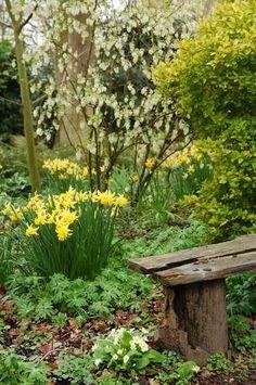 Beth Chatto's Woodland Garden