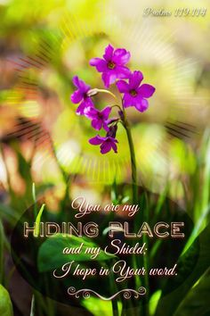 You are my hiding place & my shield; I hope in Your word. Psalm 119:114