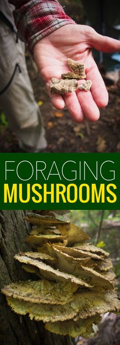 In Search of Edible Mushrooms - you can now take a tour to learn the art of foraging mushrooms.