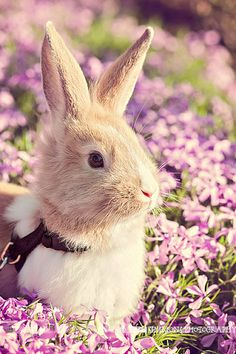 Adorable little rabbit. I want hugs.