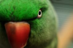 Parrot by Martin Gallie on 500px