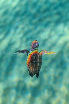 Wallpaper Iphone Foto fotografie Super Wallpapers is part of Baby sea turtles - Foto fotografie Foto fotografie Baby Animals Super Cute, Cute Little Animals, Cute Funny Animals, Cute Dogs, Baby Sea Turtles, Cute Turtles, Turtle Baby, Pet Turtle, Ocean Turtle