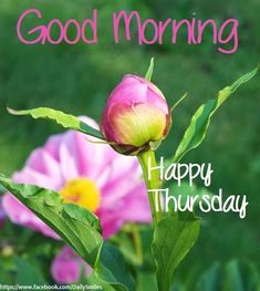 Good Morning Its Thursday   Good Morning Happy Thursday Pictures, Photos, and Images for Facebook ...