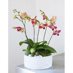 Orchidea decoration
