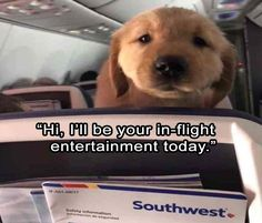 Hilarious Animal Pictures Picdump of The Day 29 Pics) - TrollPics Very Funny Pictures, Funny Animal Pictures, Cute Funny Animals, Funny Cute, Animal Pics, Funny Images, Dog Quotes Funny, Dog Memes, Funny Dogs