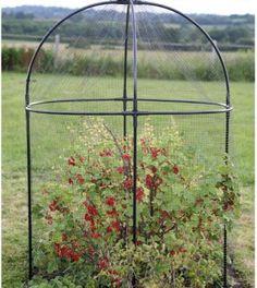 Haxnicks 'Steel Round Fruit Cage'
