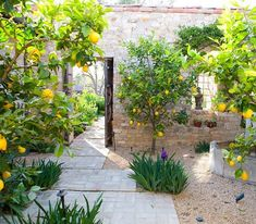 Great advice from - Sometimes editing is the hardest part of a job.I kept this entry courtyard simple and serene by limiting the plant palette, there was enough going on with the hardscape textures. Italian Courtyard, Italian Garden, Tuscan Courtyard, Courtyard Entry, Mediterranean Garden Design, Tuscan Garden, Back Gardens, Outdoor Gardens, Citrus Garden