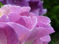 In the rain. #flower
