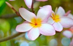 Kauai Flowers.
