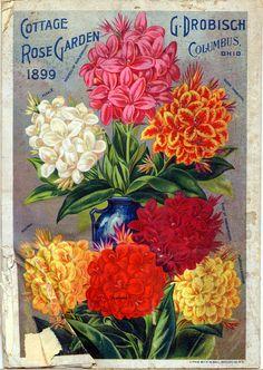Back Cover,  Cottage Rose Garden 1899