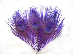 ROYAL PURPLE Peacock Feather Eyes. Pristine D.I.Y. feathers for boutonnieres, earrings, wedding bouquets and millinery (Large)(6 Feathers) via Etsy