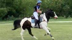Cute Horses, Pretty Horses, Horse Love, Horses Jumping Videos, Horse Videos, Cute Little Animals, Cute Funny Animals, Horseback Riding Tips, Most Beautiful Horses