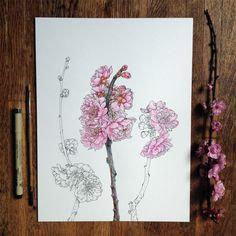 Artiste illustrateur et scientifique, Noel Badges Pugh a un talent incroyable pour dessiner la flore et la faune. Il a récemment illustré un guide entier s