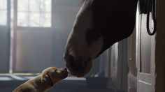 """Budweiser's """"Puppy Love"""" – The Best Super Bowl Commercial 2014 Super Bowl, Budweiser Commercial, Commercial Music, Clydesdale Horses, Best Bud, Horse Love, Puppy Love, Puppy Find, Cute Puppies"""