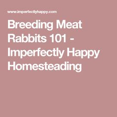 Breeding Meat Rabbits 101 - Imperfectly Happy Homesteading