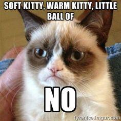 Grumpy Cat How About No | Grumpy Cat - soft kitty, warm kitty, little ball of no