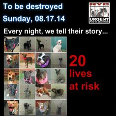 Urgent 20 lives at risk at acc NY Pet Adoption, Animal Adoption, Types Of Animals, Make Up Your Mind, All Gods Creatures, Animal Rescue, Rescue Dogs, Dog Care, In This World