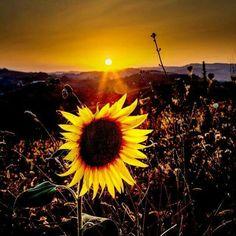 Ti aspetterò come il poeta aspetta l'alba...ti seguirò come il girasole segue il sole...ti baceró come  come il mare bacia la sabbia...