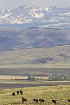 190 Best Laramie Wyoming images