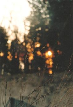 bokeh effect in background Bokeh, Elf Rogue, Fall Inspiration, Death Cab For Cutie, Samhain, Mabon, Bushcraft, Land Scape, The Great Outdoors