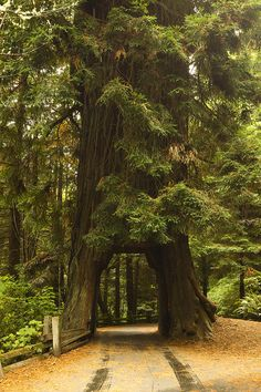 Redwood, CA