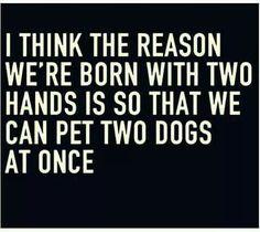 Or 2 kitties