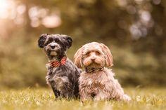 Hundehalsbänder für gross & kleine Fellnasen, exklusiv bei MIKKIS.   Handgemacht & aussergewöhnliche Halsbänder- & Leinensets.  #dog #instadog #hundeliebe #dogstagram #doglover #dogphotography #puppy #hundefotografie #dogs #hundträning Dogs, Animals, Nice Asses, Products, Animales, Animaux, Pet Dogs, Doggies, Animal