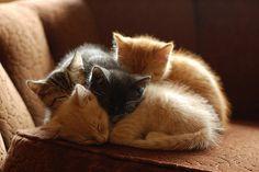 adorable cuddling kitties