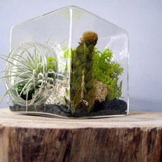 Here is what you will need to make your own terrarium, or miniature landscape.