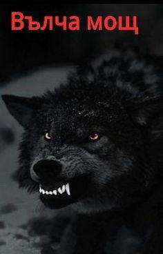 Prowling Dark Angry Wolf, still beautiful Wolf Spirit, Spirit Animal, Beautiful Creatures, Animals Beautiful, Wolf Hybrid, Angry Wolf, Wolf Stuff, Wolf Quotes, Wolf Love