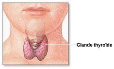 LIENS ENTRE LE GLUTEN, L'HYPOTHYROIDIE (DE TYPE HASHIMOTO) ET HYPERTHYROIDIE (MALADIE DE 'GRAVES) Il y a un lien de plus en plus présent dans la littérature scientifique entre la consommation de gluten et ces deux maladies auto-immunes. La logique est simple, le gluten contient une protéine nommée gliadine et sa structure biochimique ressemble aux tissus…