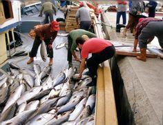 Pescadores de Xàbia #xabia #javea #costablanca #port Javea Spain, Alicante, Fish, Angler Fish, Pisces