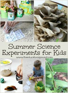 Best Summer Science Experiments for Kids: From raising butterflies to growing mushrooms and everything in between. These are the top kid selected science projects to make and do over summer break. Fun summer activities for kids! Educational Activities For Kids, Outdoor Activities For Kids, Preschool Science, Science Activities, Kids Learning, Science Curriculum, Teaching Kids, Science Fair Projects, Science Experiments Kids