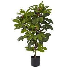 Nearly Natural 5440 Fig Tree, 32-Inch * You can find more details by visiting the image link.