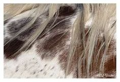 Appaloosa's are hand painted by God.